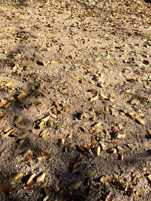 siberian leaves fallen