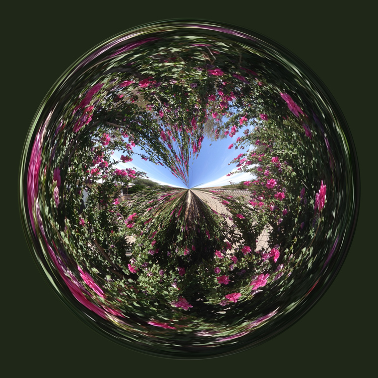 rose of sharon orb