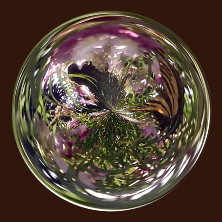 swallowtail orb