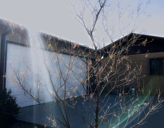 light on desert willow