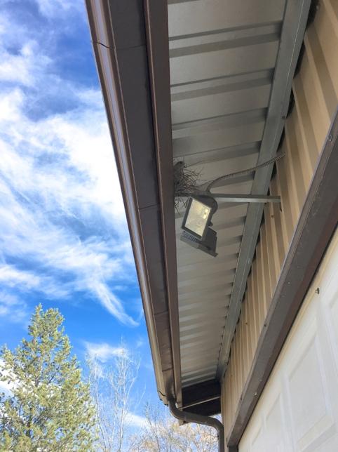 dove on garage light nest