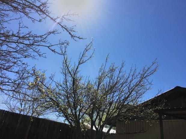 sun shining on apple tree