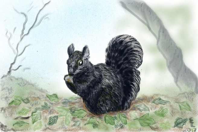 black-squirrel-drawing