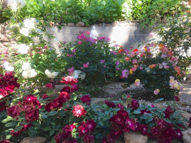underground rose garden