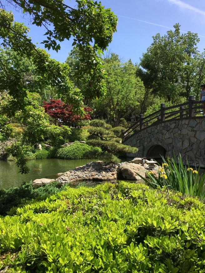 green Japanese tea garden in Fresno