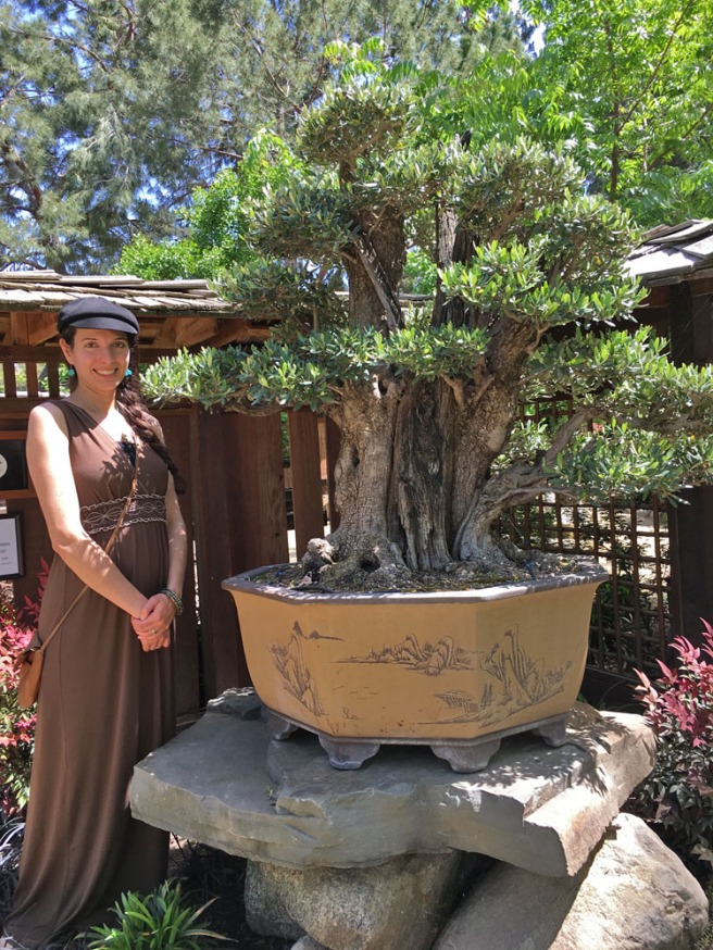 Jericha with bonsai