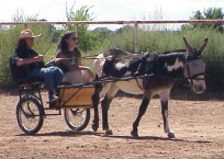 """Ambrose arrived at our place as a """"dead broke"""" donkey. Meaning bombproof. Here we were very soon after he joined us testing out his (and our) driving skills."""