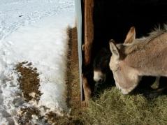 Jasper and Gigi with snow