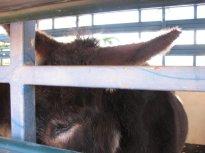 Jasper looked so sad, tied into the big truck....